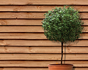 træbeskyttelse farver